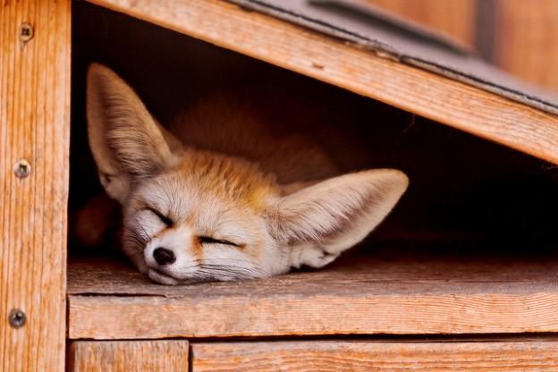 Wake Me up…